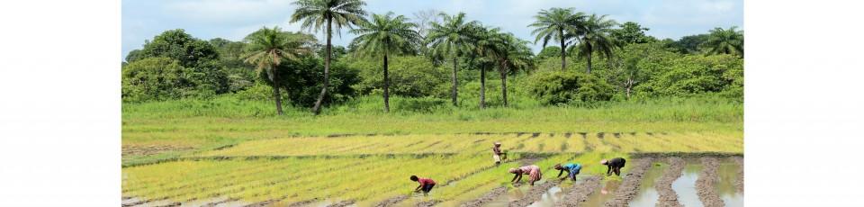La République de Guinée-Bissau bénéficie de l'extension de l'ISSD