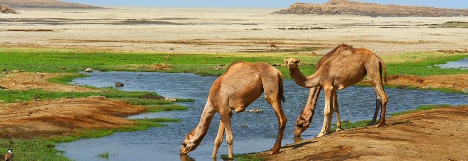 Djibouti bénéficie de l'initiative de suspension du service de la dette